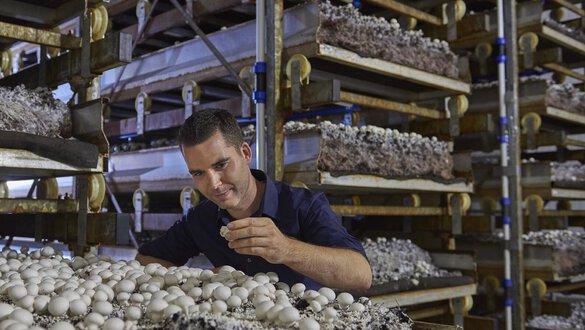 Koolen champignons
